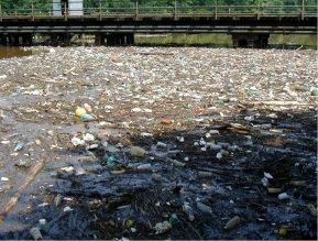 Polystyrene Foam Food Containers Littering Anacostia River, DC - Photo Credit: Clean Water Action Fund.